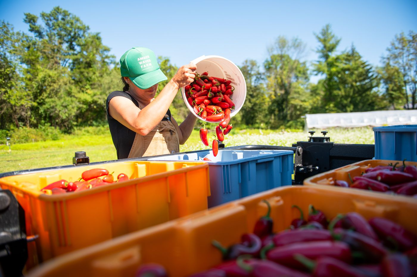 Why these Montco hot sauce makers quit their day jobs to farm peppers