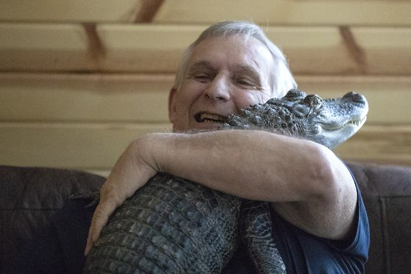 The emotional support alligator that helps a York County man deal with depression