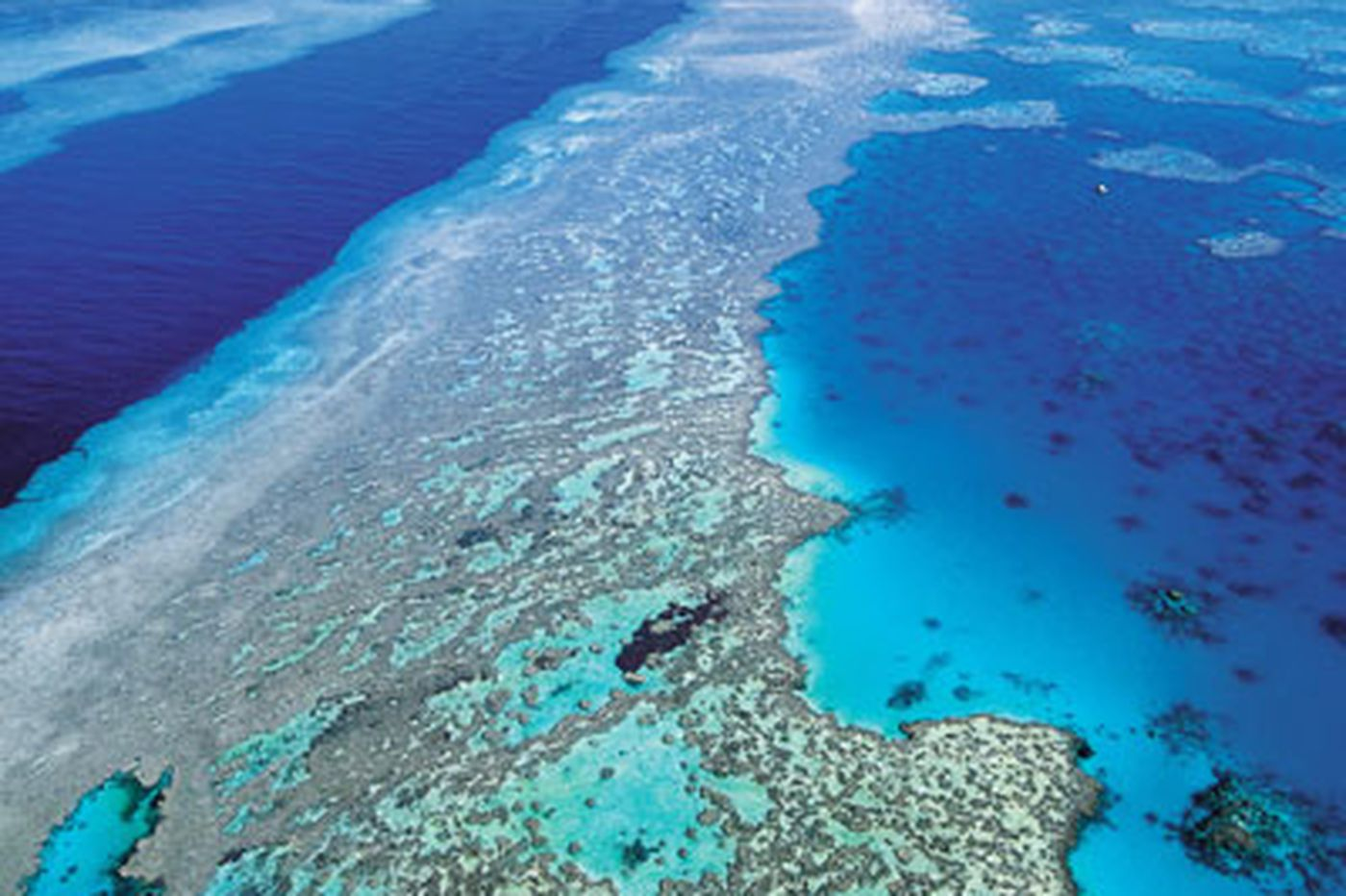 Highest-ever CO2 levels killing coral reefs