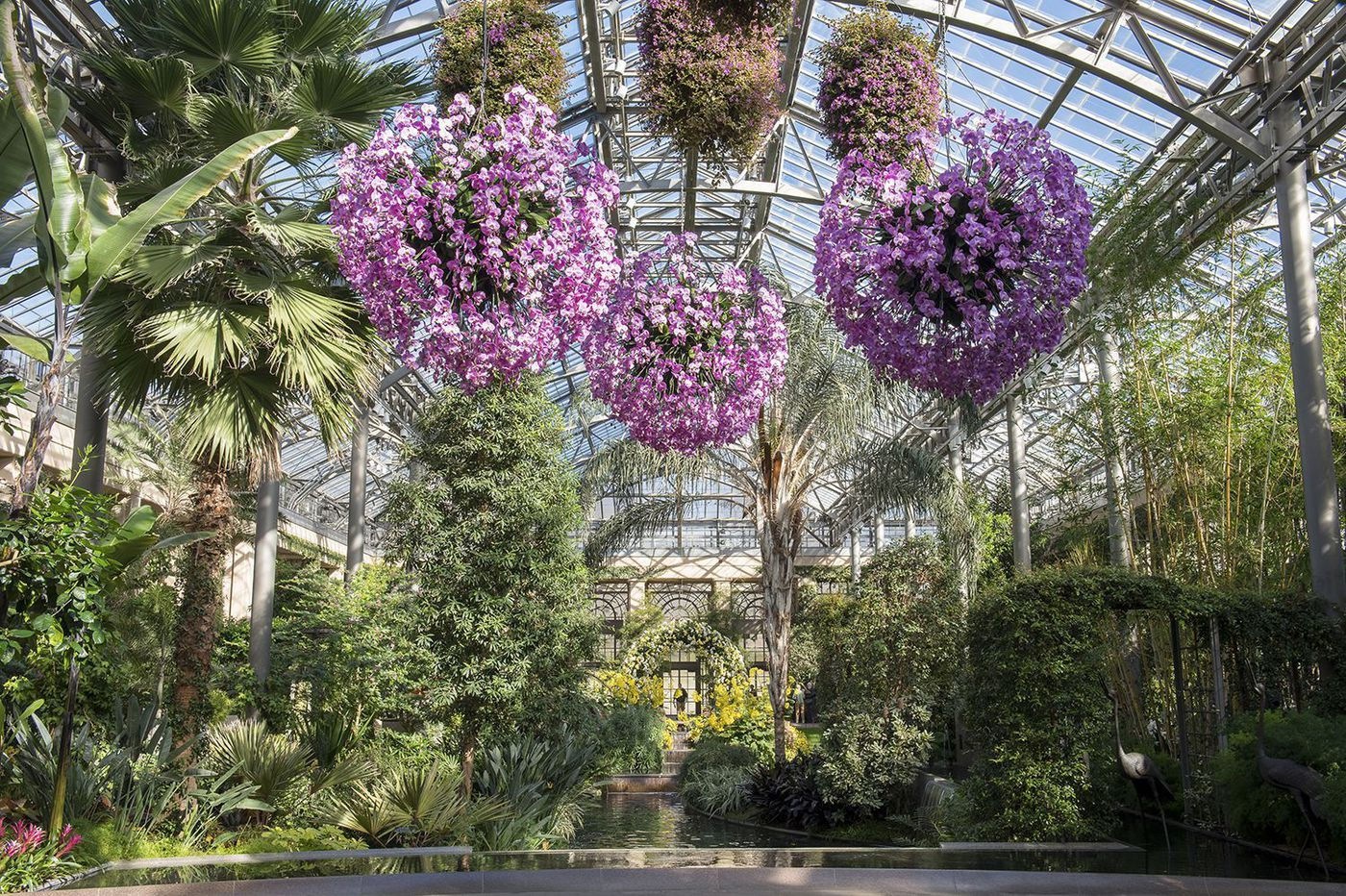 What to do in Philly this week (Jan. 17-23): Do good for Martin Luther King Jr. Day, dance like Queen Bey, revel in the orchids at Longwood Gardens, and more