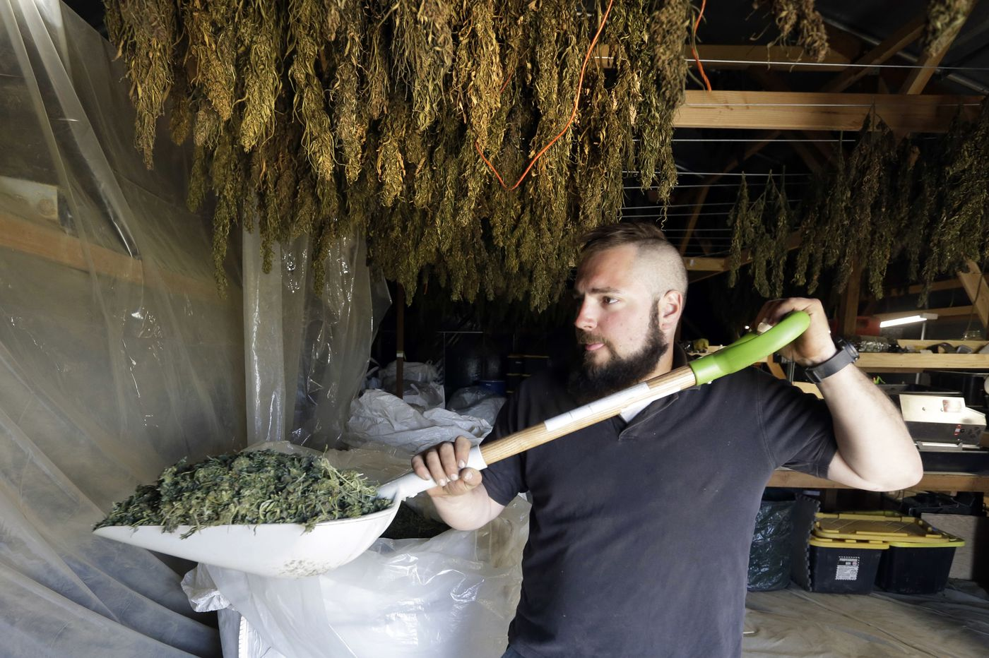 Delaware gets approval from USDA to grow hemp. Is that a good thing?