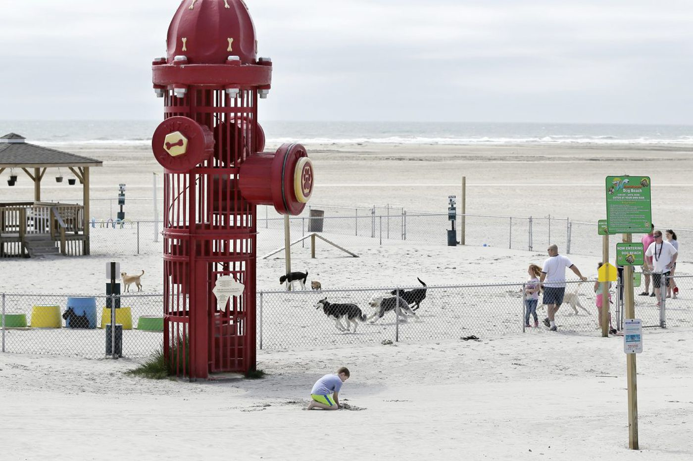 Wildwood's beach is where the dogs are