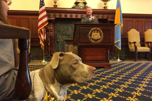 Mayor Kenney supports effort to make Philadelphia a 'no-kill' city to save thousands of animals