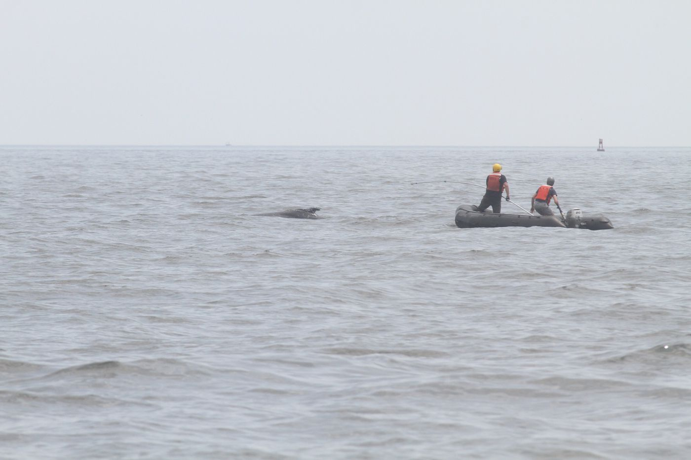 Rescue team saves entangled humpback whale off New Jersey coast