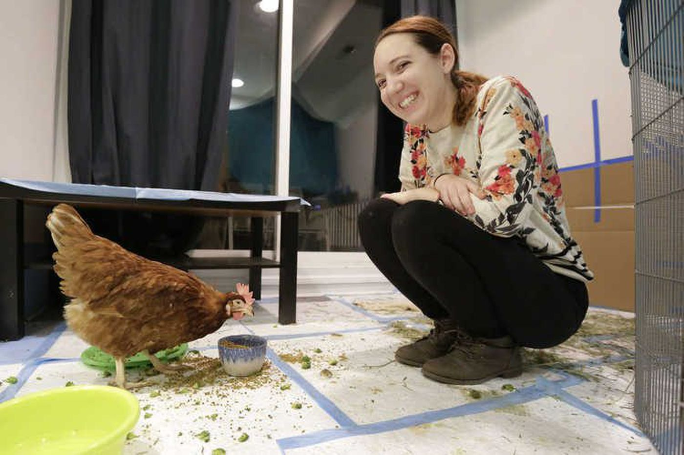 Meet four chickens saved from a slaughterhouse by Philly activists