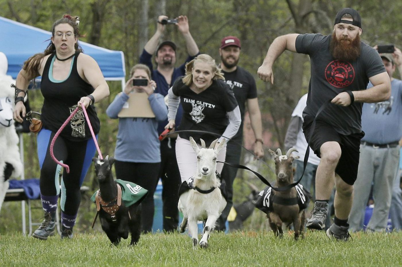 The cutthroat goat races of Sly Fox Brewery's annual Bock Fest