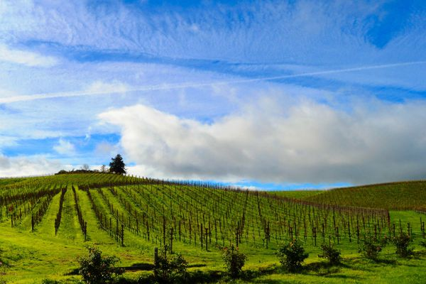 As pricey cabernet grapes crowd Napa Valley, one chardonnay region thrives