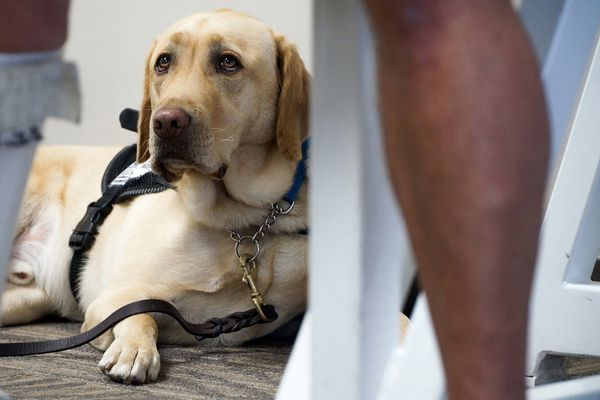 Your emotional-support animal might not be allowed on airplanes anymore