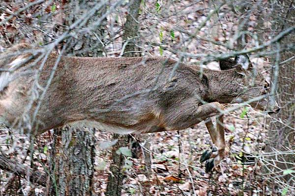 Deer Dad: How a chilly morning in search of whitetails meant more than hunting
