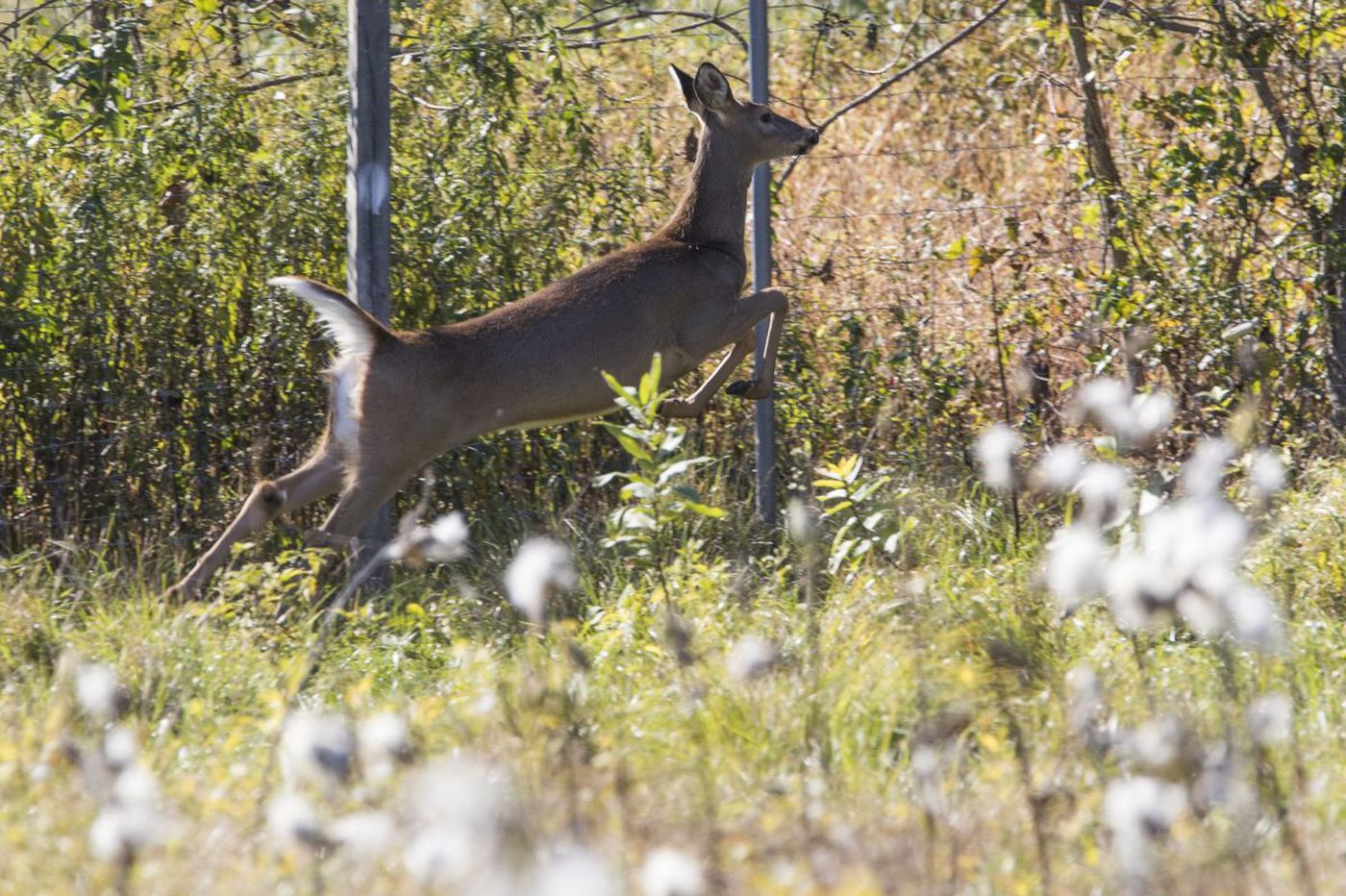 Watch out Pa. and N.J. drivers : Deer darting into traffic can be trouble, even deadly