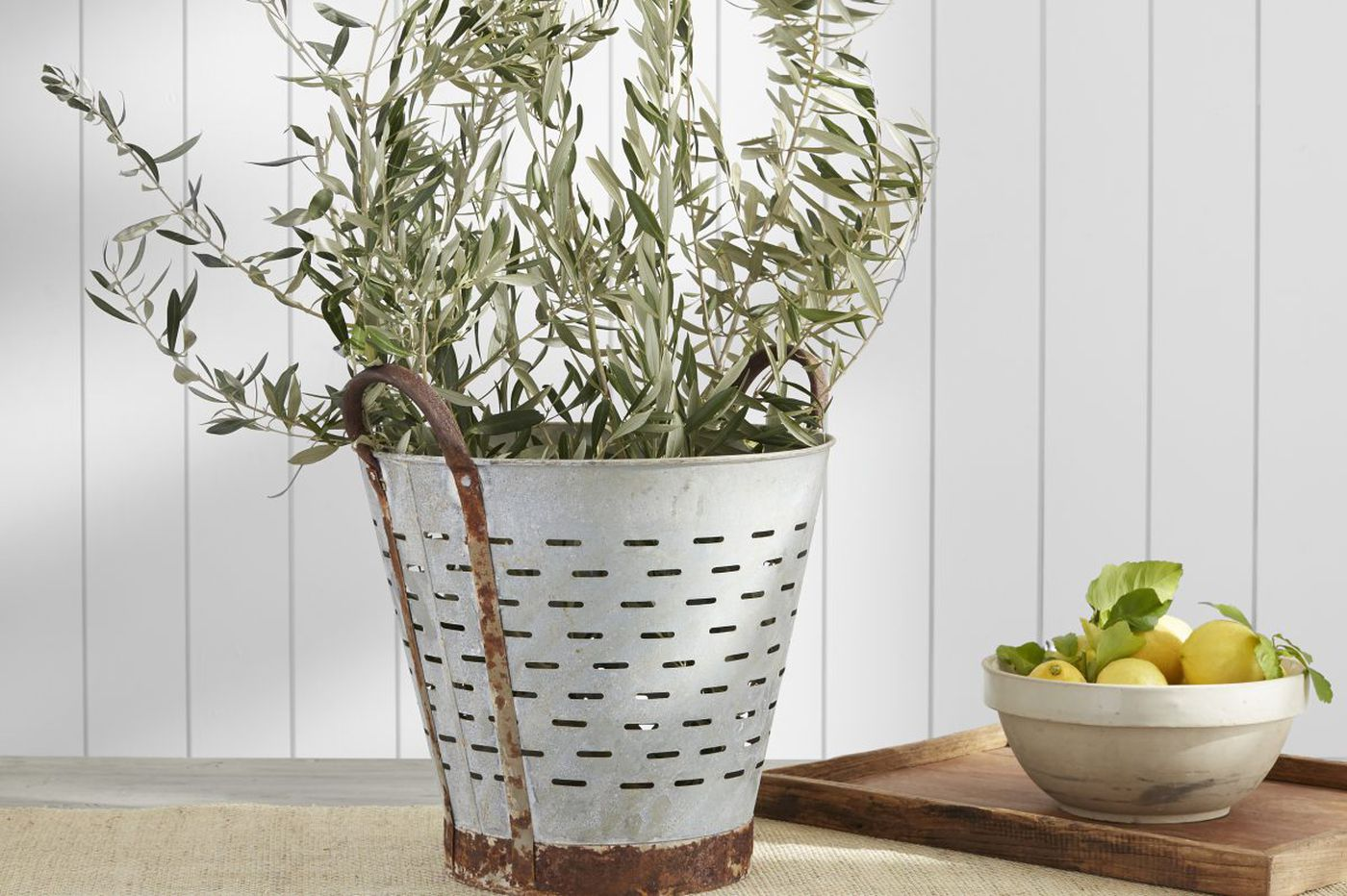 Ask Jennifer Adams: What edible indoor plants can I grow?