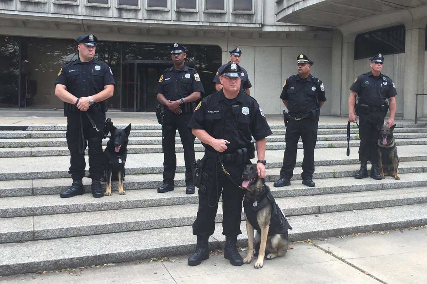 Vested interest: Woman donates 22K to bulletproof Phila. police dogs