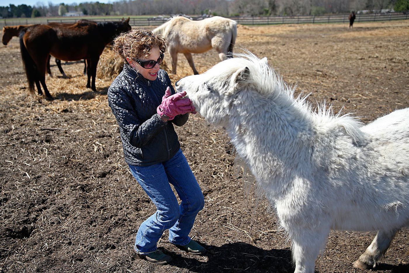Founder of New Jersey horse sanctuary charged with animal cruelty