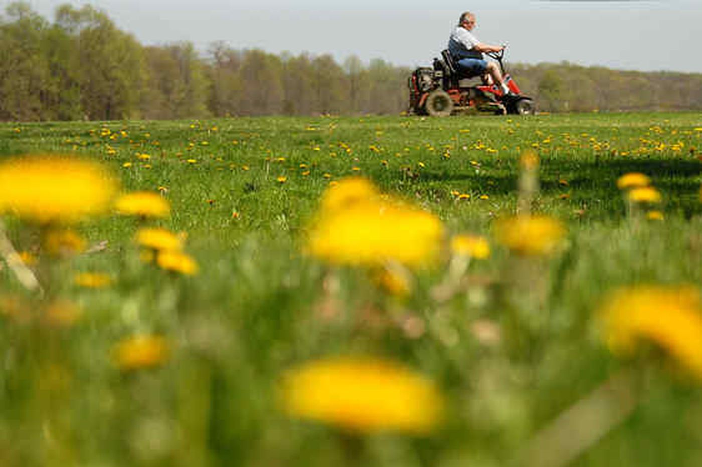 Why younger generations reject the perfect green lawns their fathers labored over