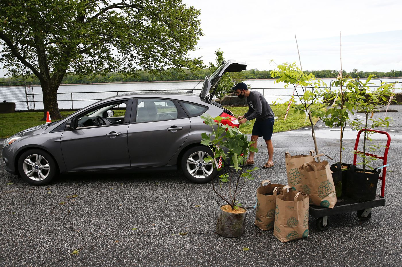 TreePhilly launches fall giveaway with 1,000 trees for pickup