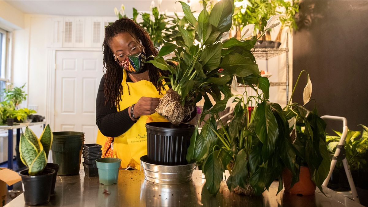 Lifelong plant lover opens her own Chestnut Hill shop
