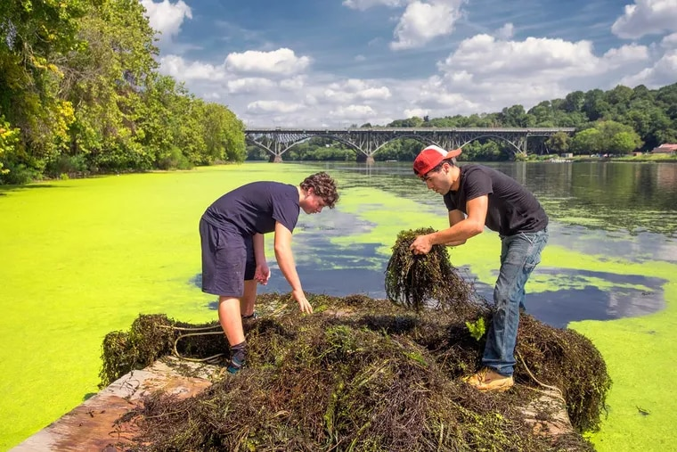 Piling mounds of milfoil pulled from the river are Adam Lutz (left) and Efrain Santiago. Short of government dredging, the battles are more low-tech.