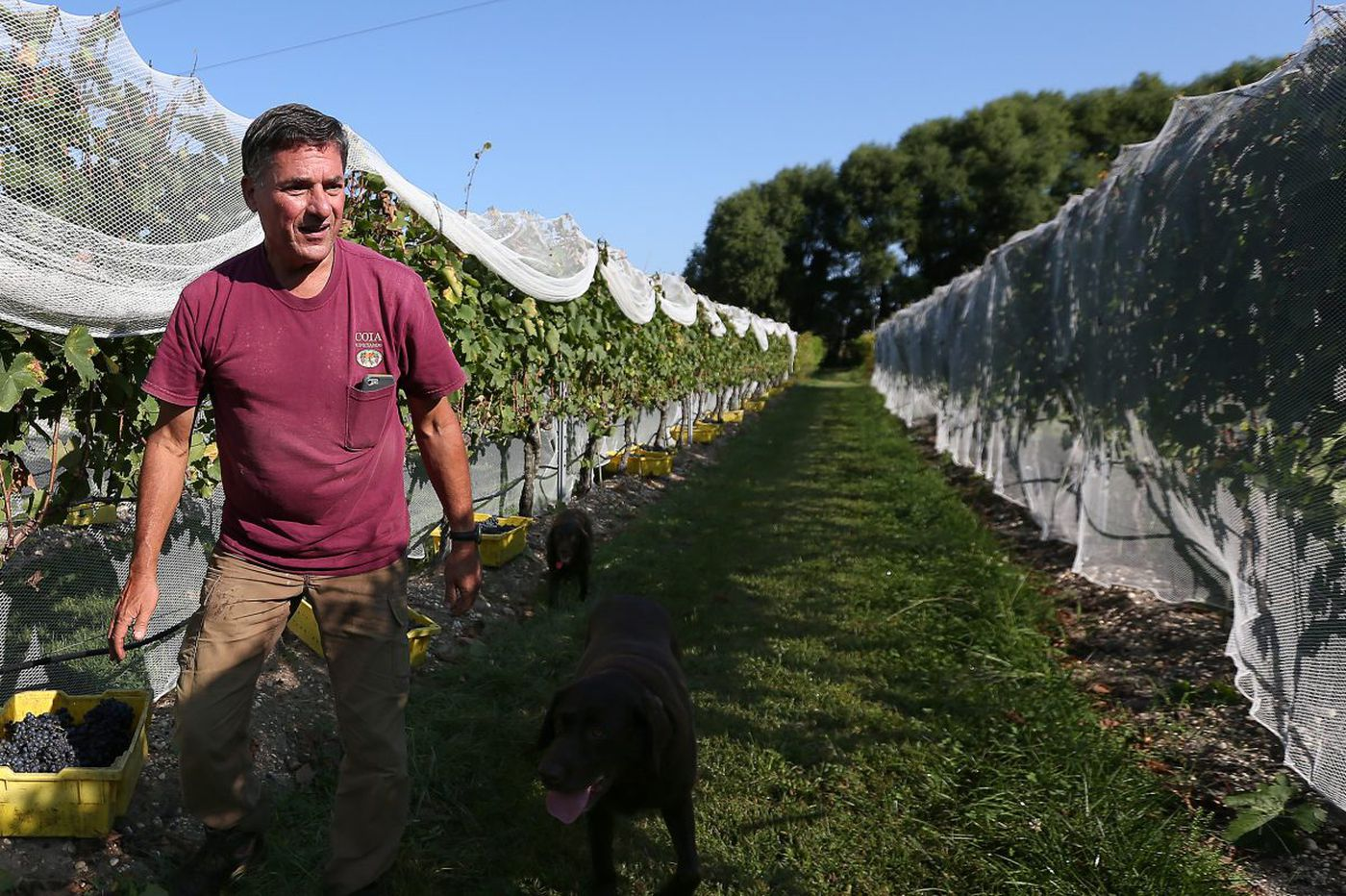 Strong demand for N.J. grapes from supply-challenged winemakers
