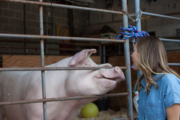 PSPCA and Jen Utley launch Barn Animal Fund to help rescued horses, pigs, and chickens