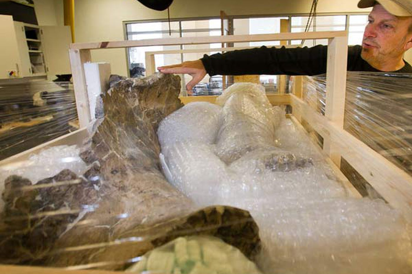 Massive dinosaur skeleton heads back to Argentina