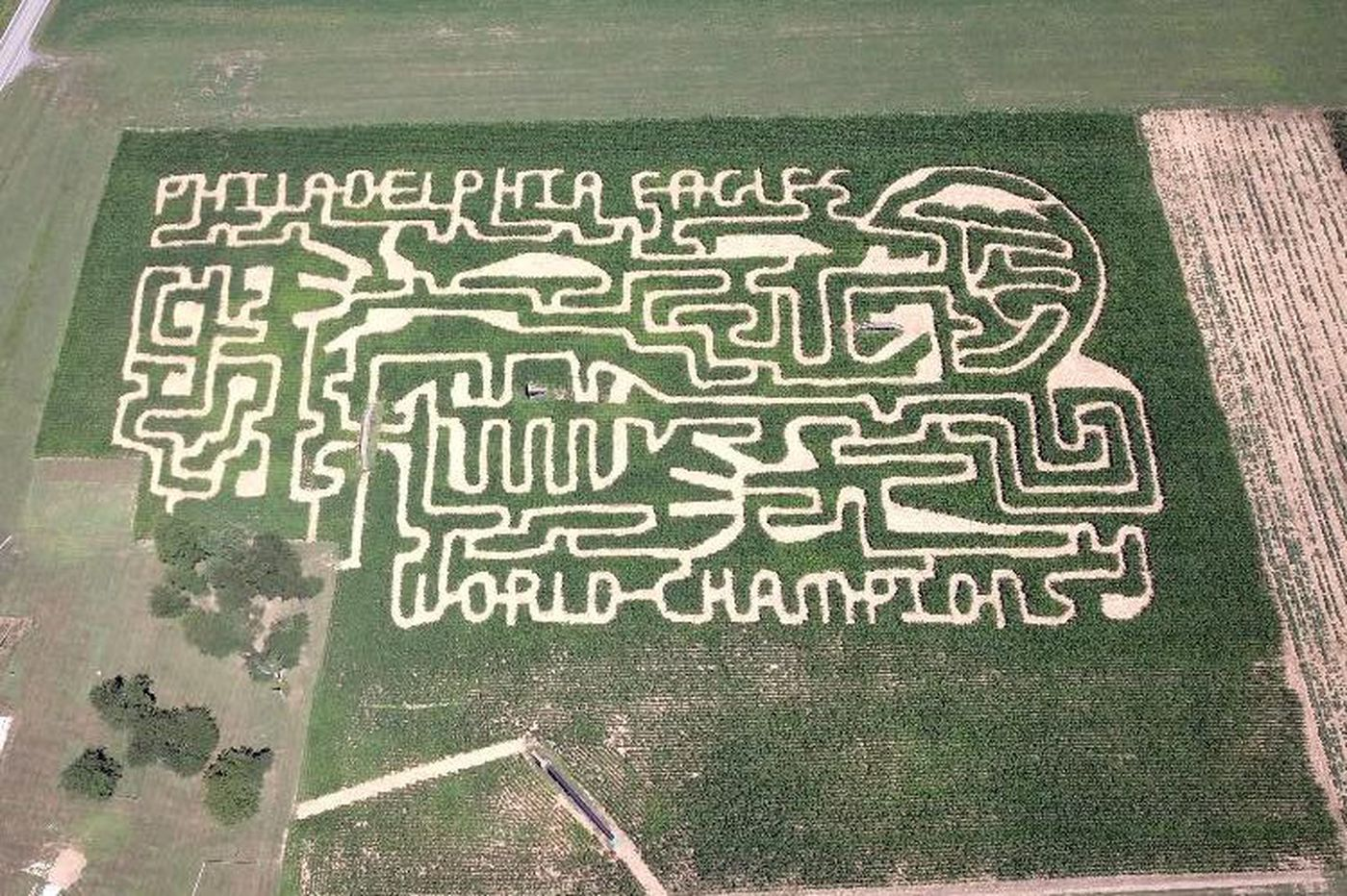 World Champion Eagles theme was a no-brainer for Chester County corn maze