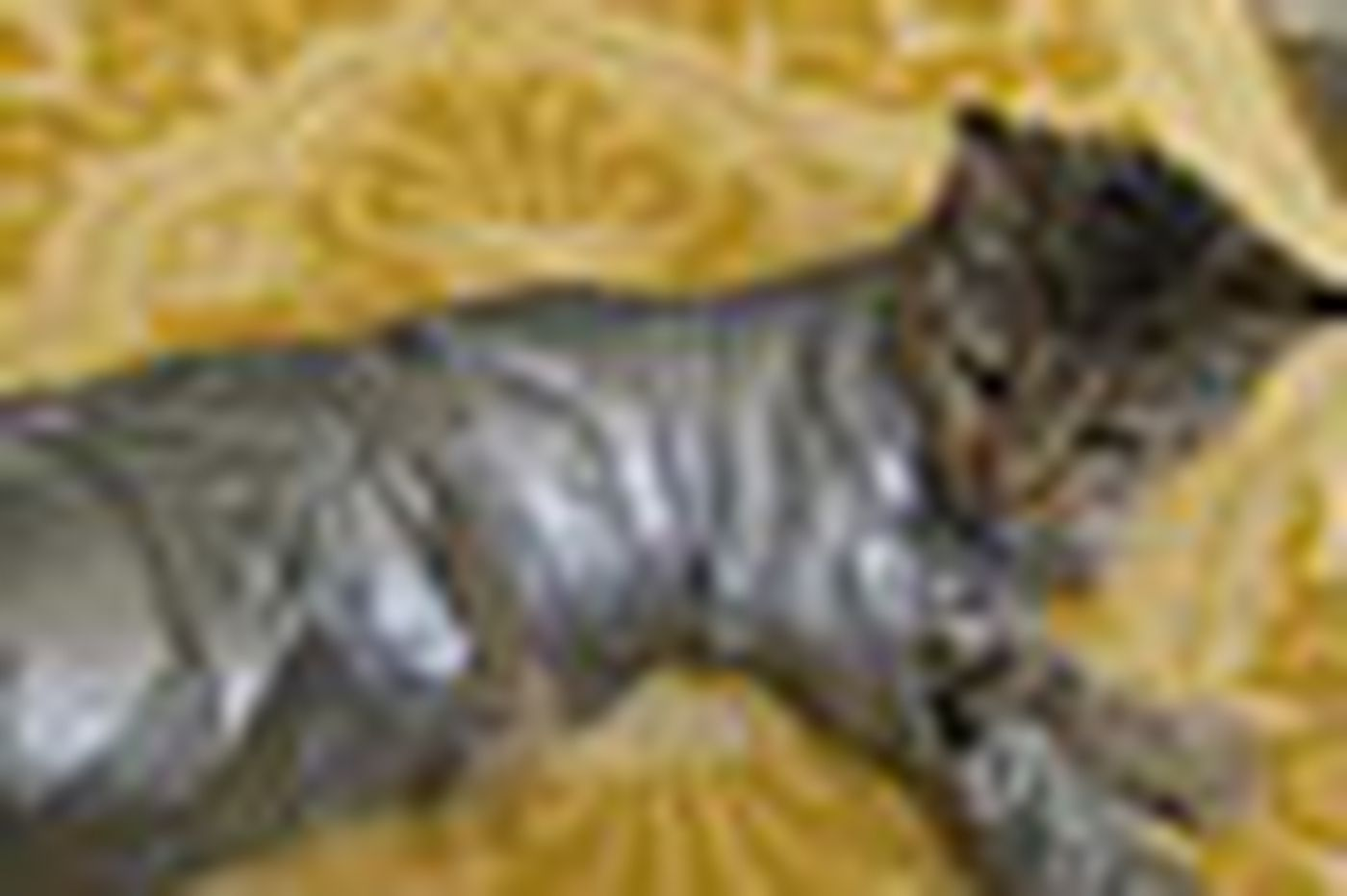 Reward offered in case of duct-taped cat