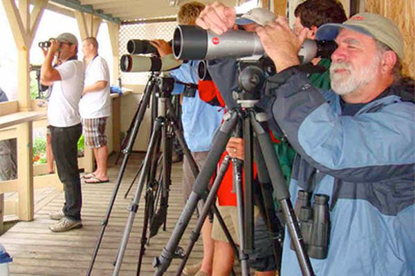 Birders flock to see exotic birds swept in on the wind of the hurricane