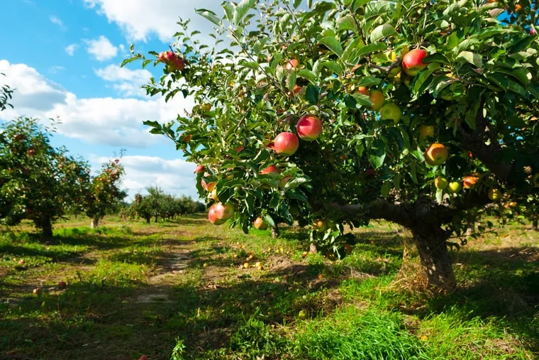 Pick your own apples, peaches, berries, corn, flowers and more at these farms near Philly.