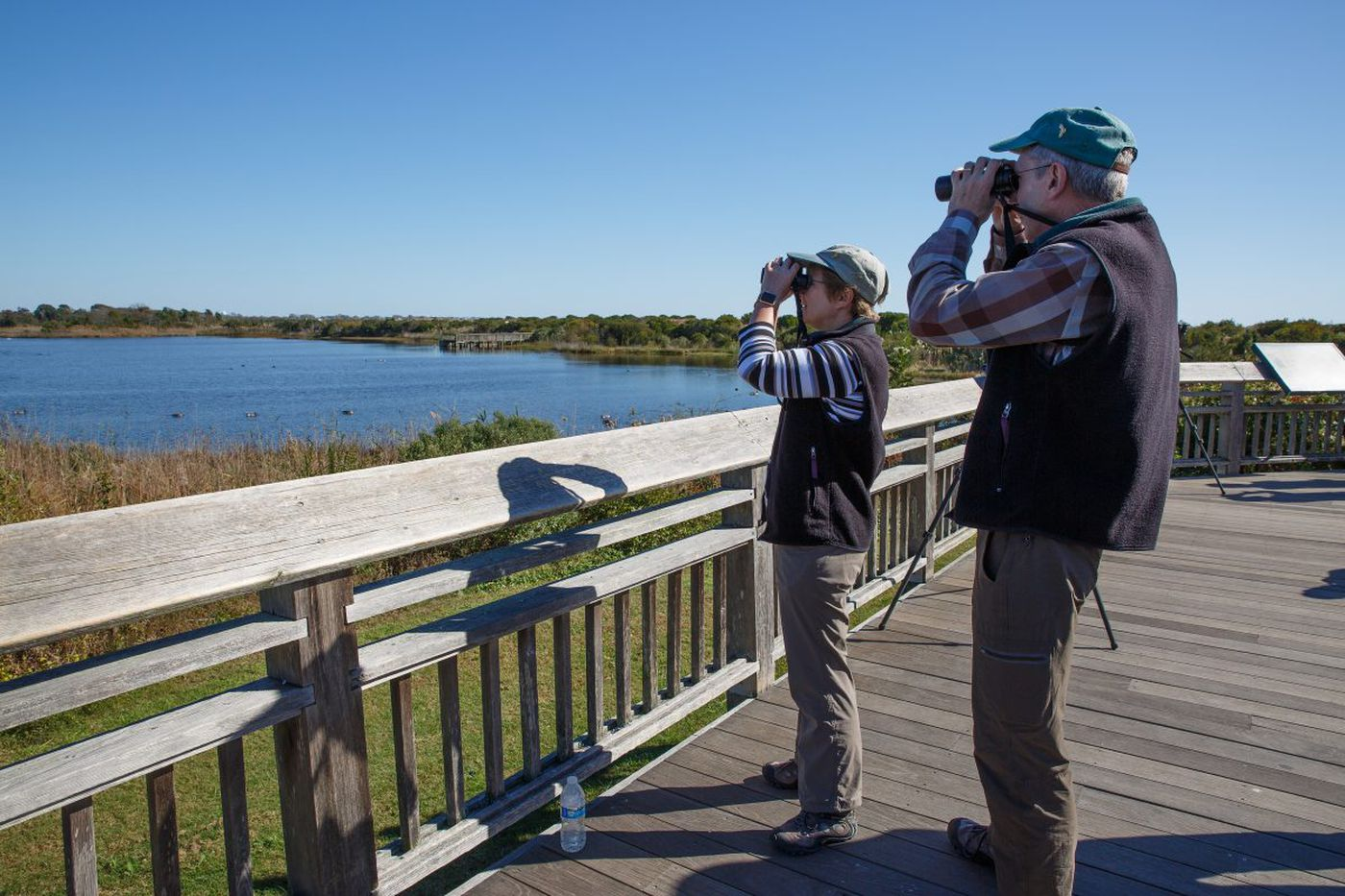 What's that sound in Cape May? 10,000 yellow-rumped warblers chirping at the same time