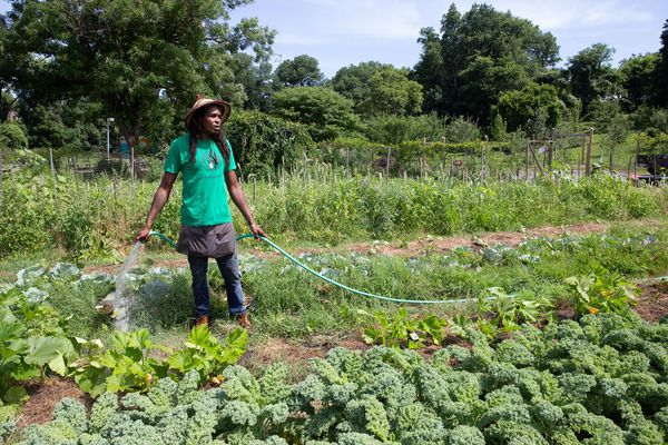 Philly's urban farming plan could include hundreds, possibly thousands, of vacant lots