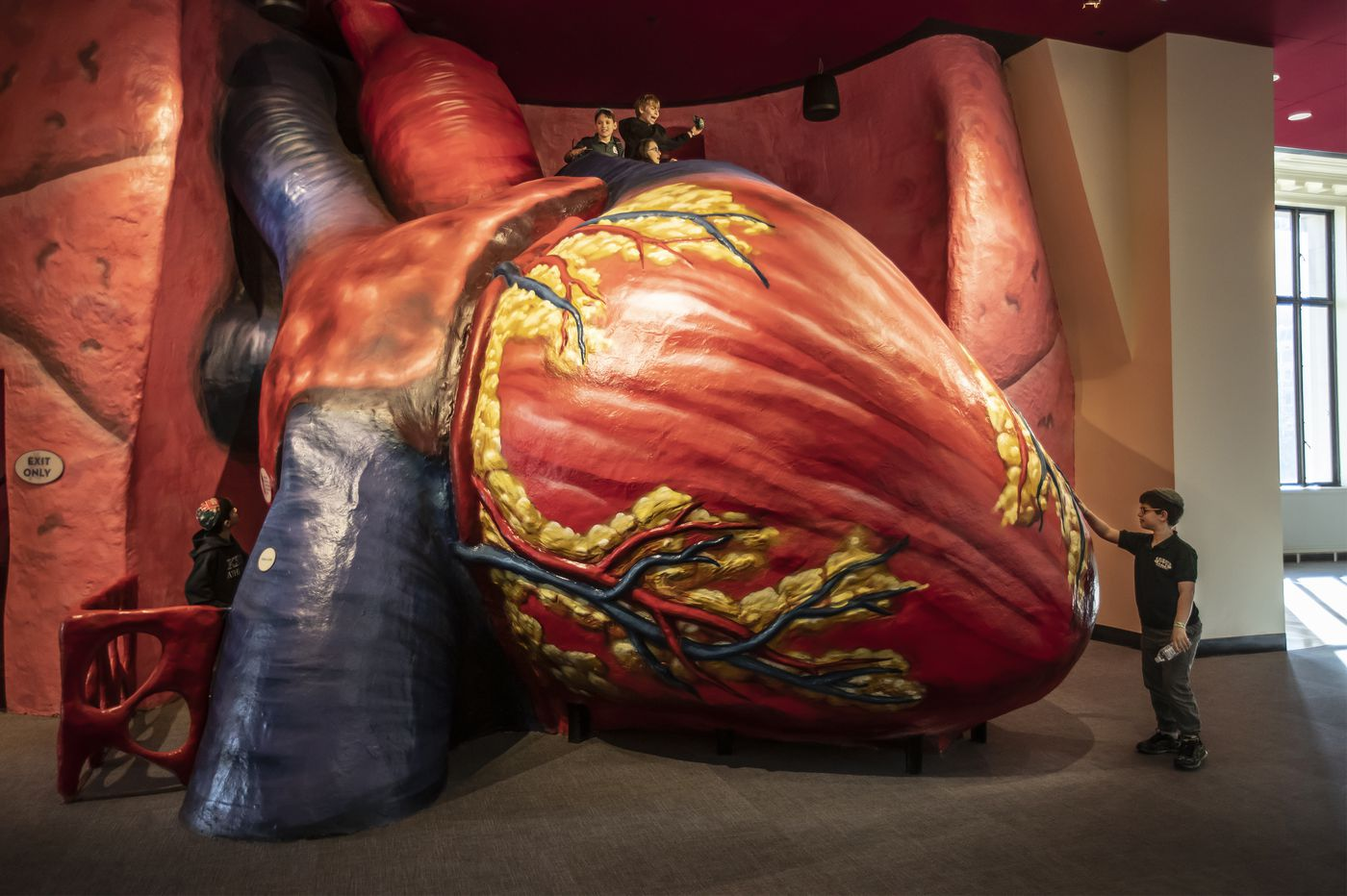 A rescue, canoodling, and that smell: Philly's tales from the Franklin Institute's Giant Heart, which just got a makeover
