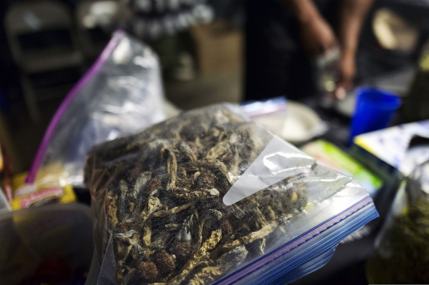 Denver becomes first USA  city to decriminalize 'magic mushrooms'