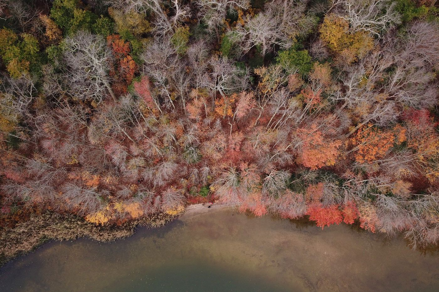 Sea rise threatens ancient N.J. trees; how to keep your gut happy for the holidays | Morning Newsletter