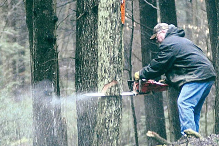 Supervisor Daniel Roupp cuts down a tree along Buckhorn Road, which provides truck access to three drill rigs.
