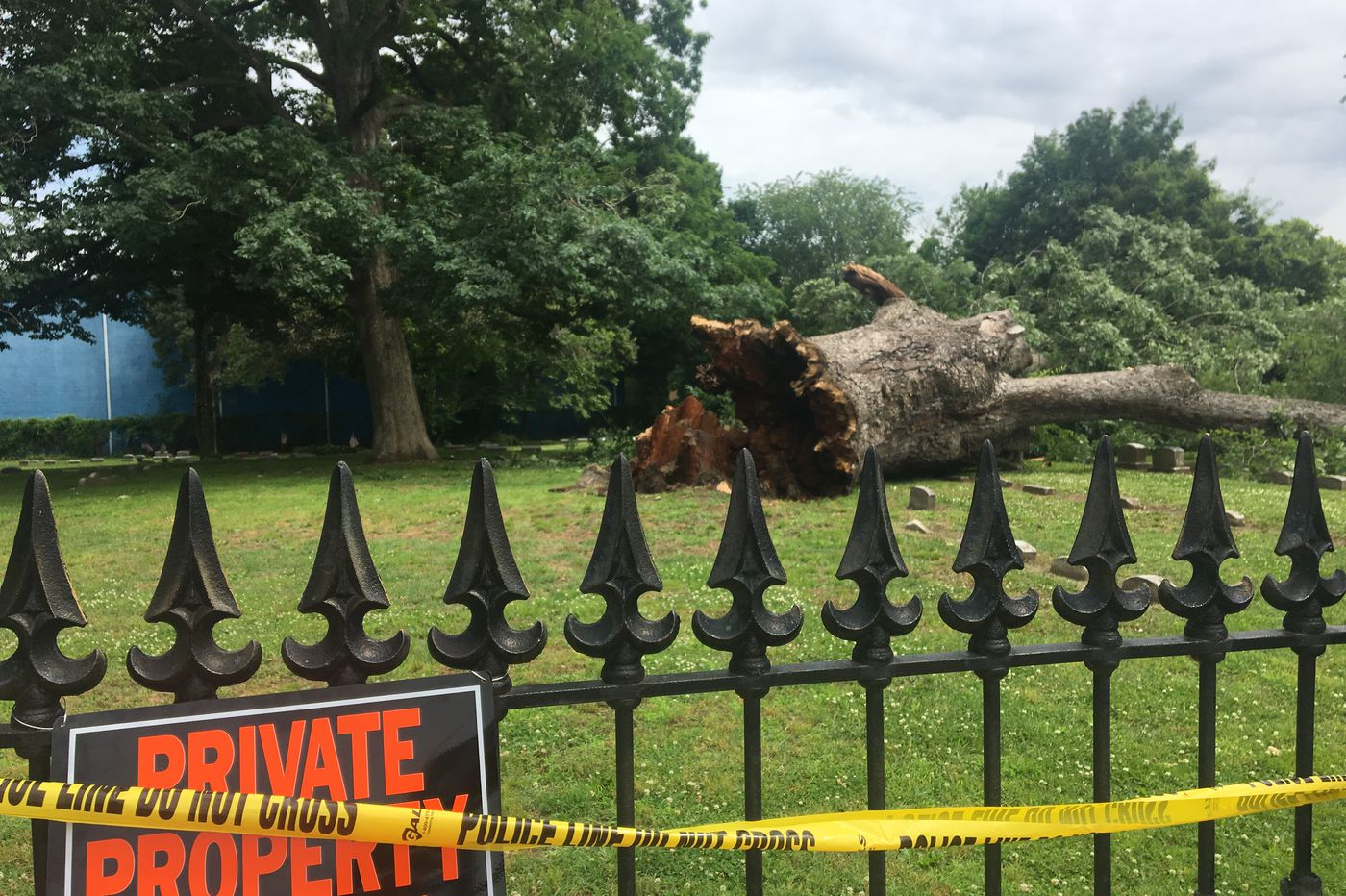 Nearly 600-year-old Salem Oak topples: 'It was an emotional thing for everybody'