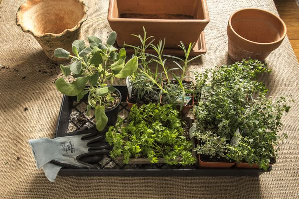 The best herbs to grow indoors, according to your light, and how to grow them