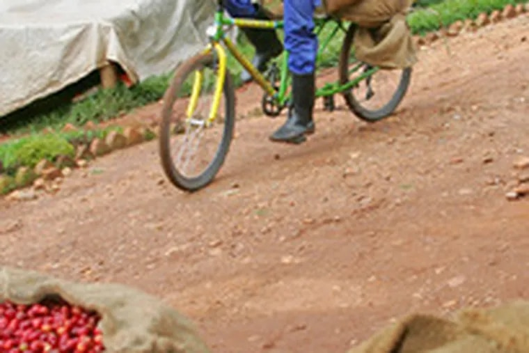 """A Rwandan transporter hauls coffee beans on a bike made by U.S. designer Tom Ritchey. In """"the land of a thousand hills,"""" bicycles are a common way to move goods - and people."""