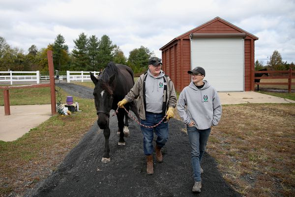 These horses are helping veterans and first responders take the reins against PTSD