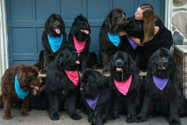 Rowan University Gifted 3 Million To Start Therapy Dog Program