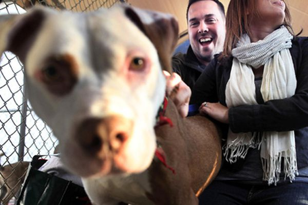 Abandoned dog Curious George is adopted