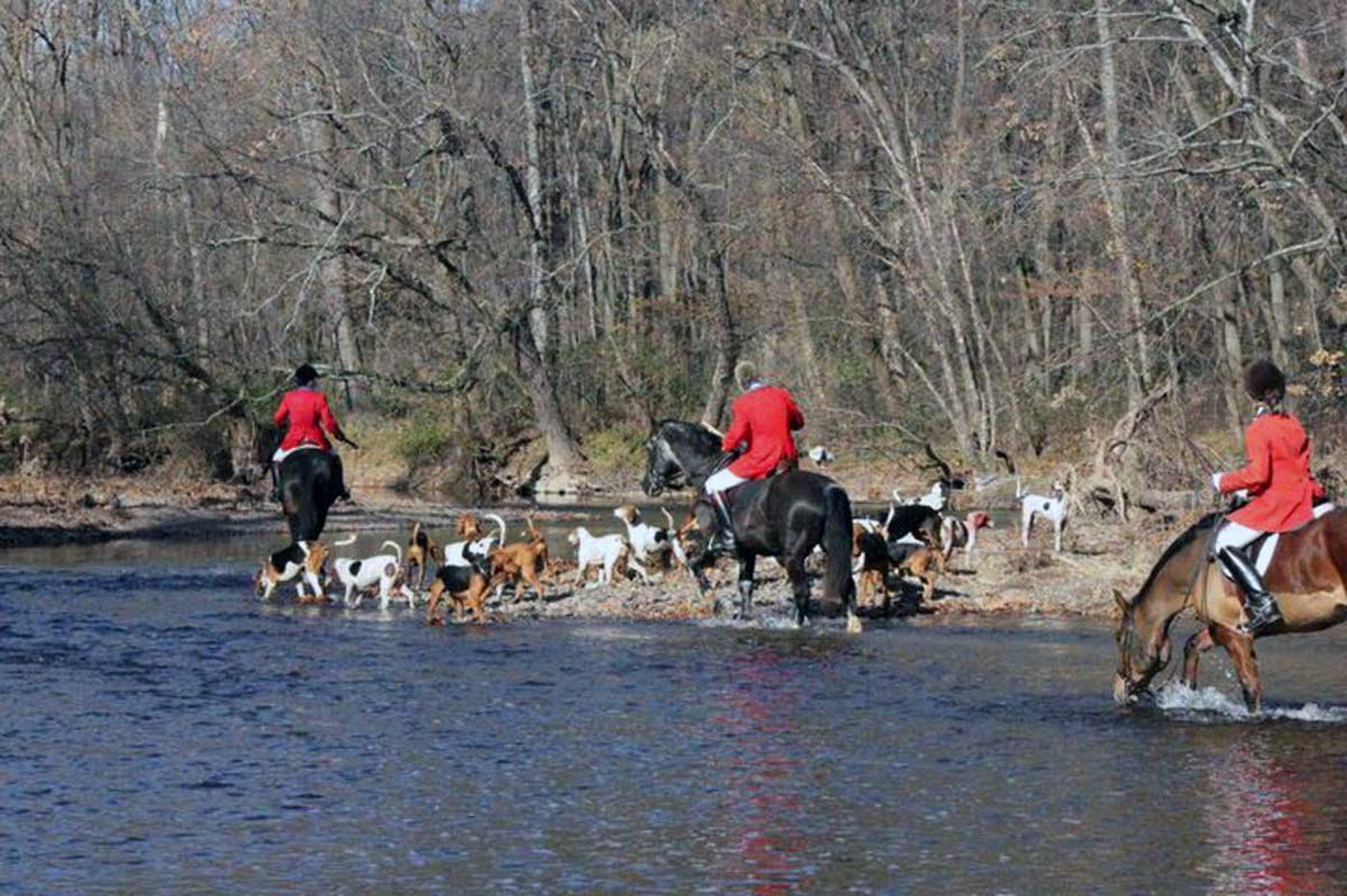 Endangered tradition: Bucks town wants to ban foxhunting