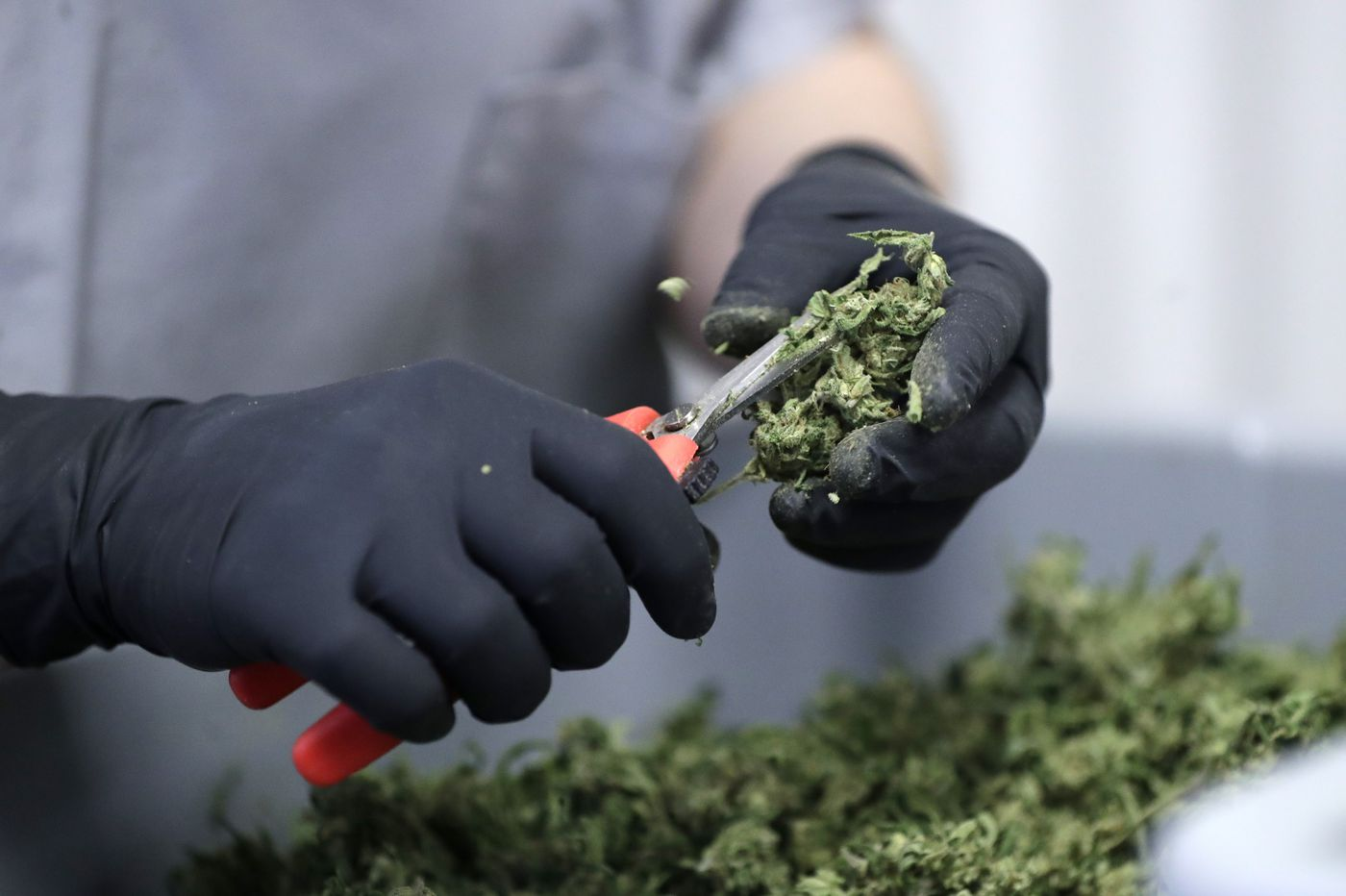 Jefferson Health hits a jackpot with its cannabis bet despite some recent stumbles