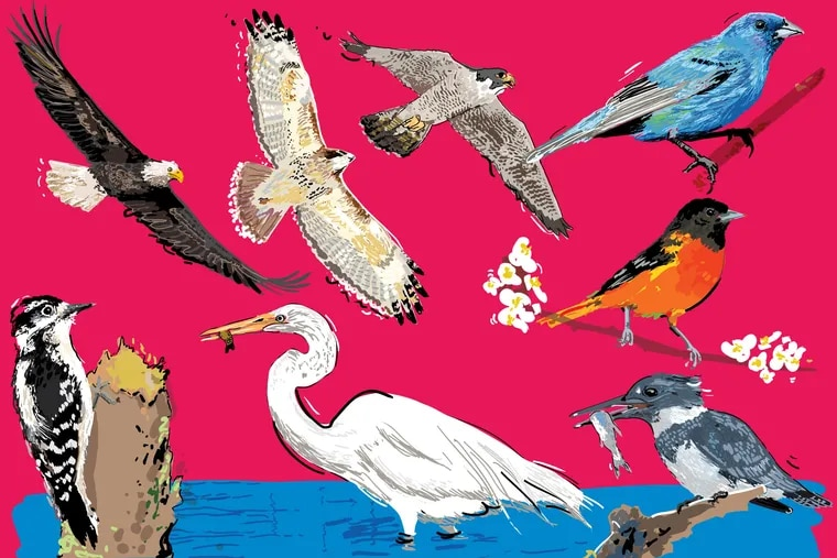 You can see hundreds of species of birds without even leaving the city.
