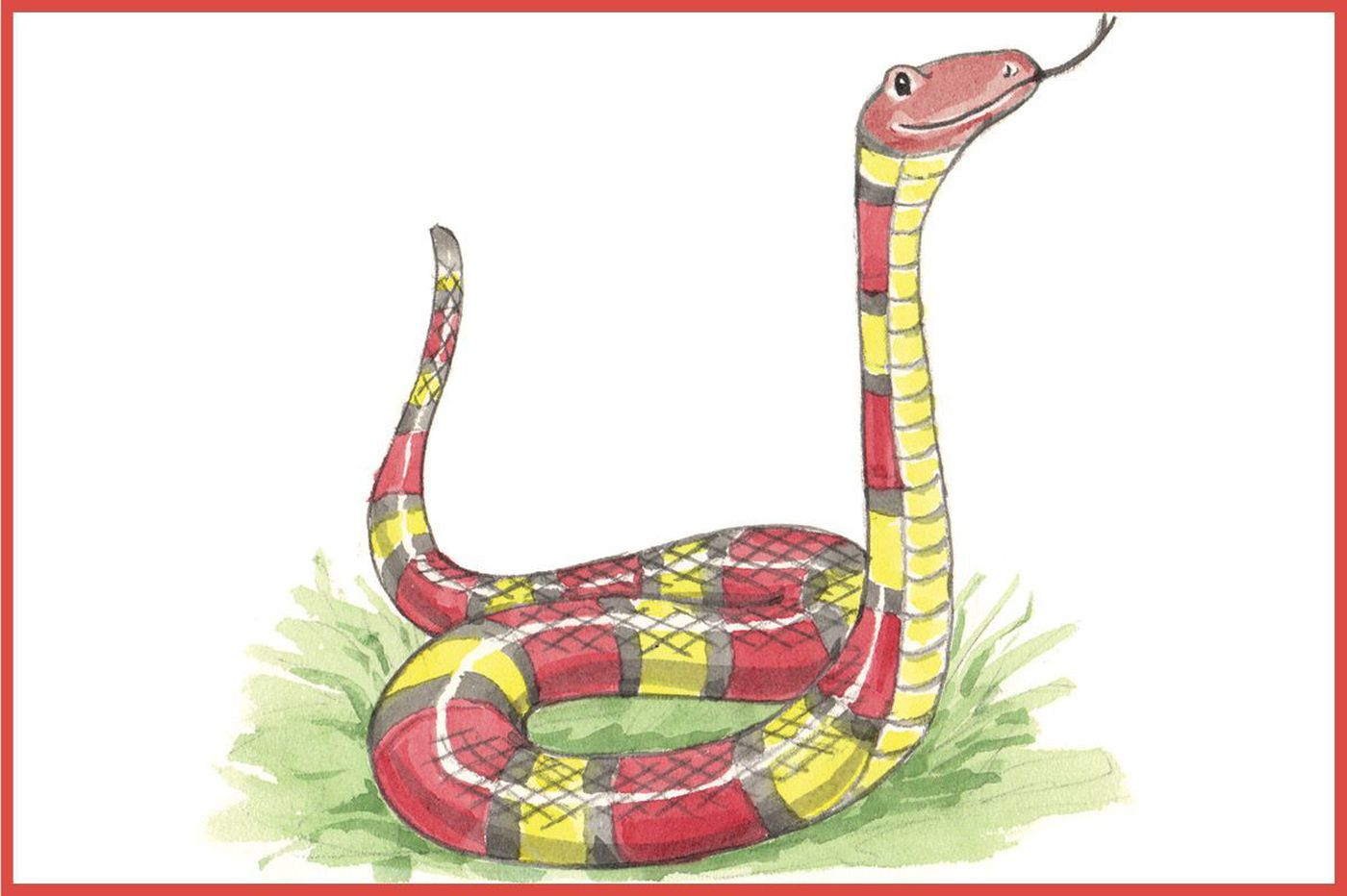 Calling all kids: Draw this friendly milk snake for a chance to have your artwork published