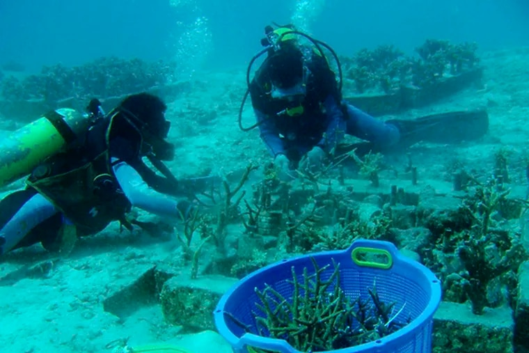 Divers transplant coral at a spot damaged by the 2004 earthquake and tsunami at an island off Indonesia in June. The reefs have bounced back faster than expected.