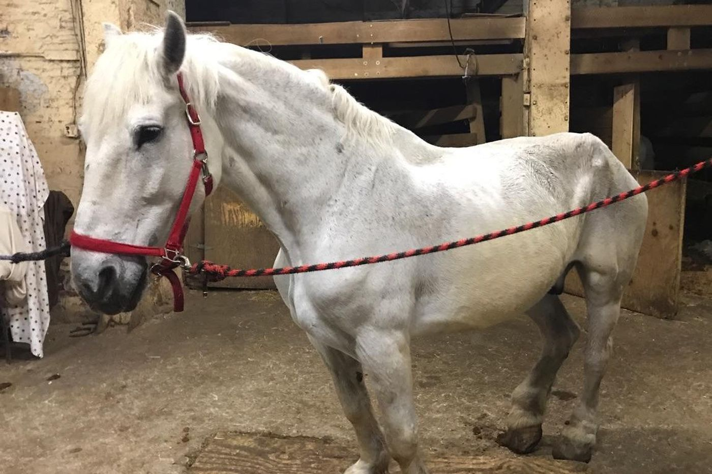 Horses that toiled for Philly Carriage Co. retired to 139-acre sanctuary