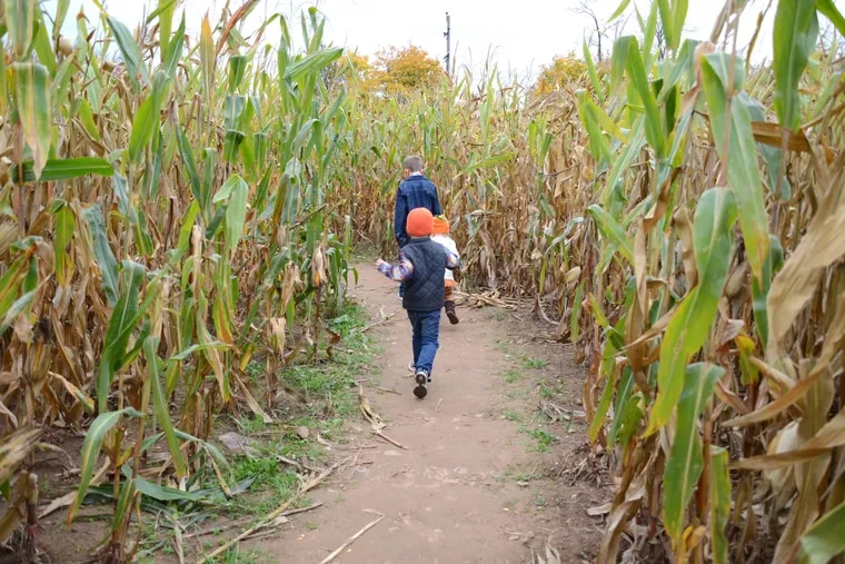 A 5-acre corn maze is part of the fun at Hellerick's Family Farm in Doylestown.