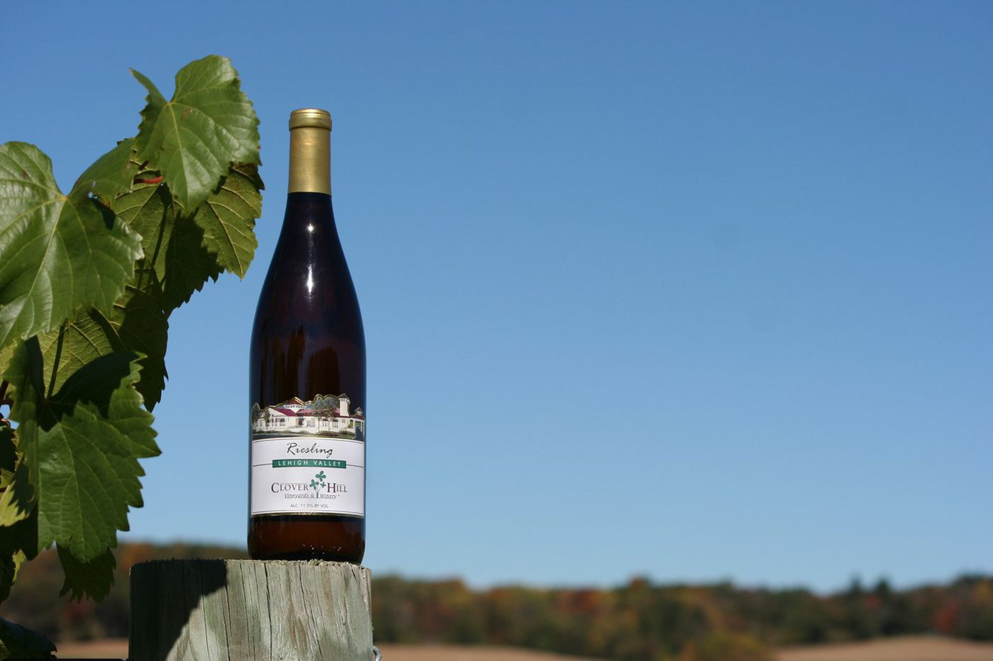Great Wine Values: Clover Hill Riesling