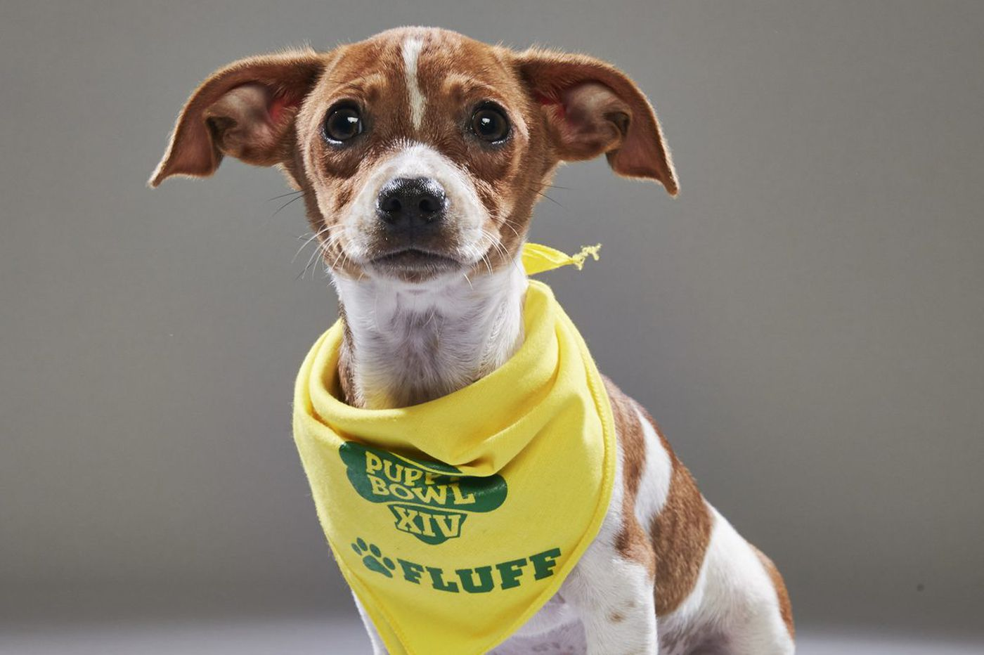 Animal Planet's Puppy Bowl XIV to feature four Philly dogs