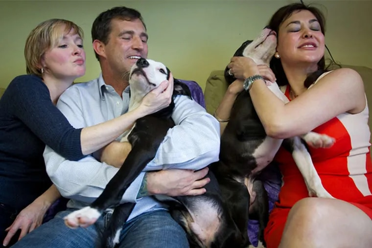 Veronica McKee and husband Jonathan Hochman of Springfield, Delco, cuddle with new dog Jermaine as Ava Gutierrez of Operation Ava gets a kiss from Jermaine's blind brother, Jeffrey.
